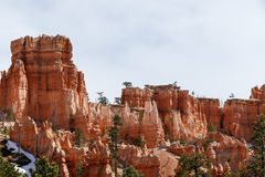 Olycksbringare och träd i Bryce Canyon, Utah Royaltyfri Fotografi