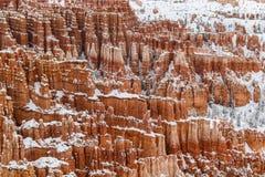 Olycksbringare och träd på klippan som täckas i snö, Bryce Canyon, Utah Fotografering för Bildbyråer