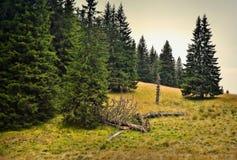Olycksoffer av skogen arkivfoto