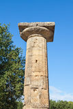 Olympia Greece stone column Stock Image