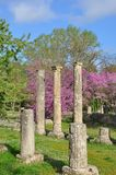 Olympian Columns and cherry trees Royalty Free Stock Images