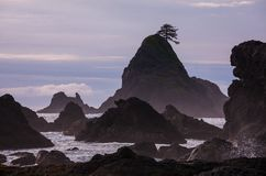 Olympic coast Royalty Free Stock Photos