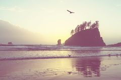 Olympic coast Royalty Free Stock Image