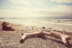 Olympic coast. Scenic and rigorous Pacific coast in the Olympic National Park, Washington, USA. Rocks in the ocean and large logs on the beach Stock Image