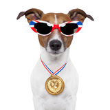 Olympic dog. With the great britain flag Royalty Free Stock Photography