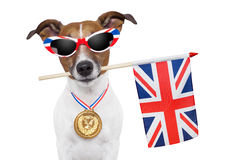 Olympic dog. With the great britain flag Stock Photo