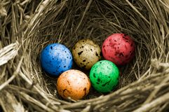 Olympic eggs. Closeup of bird's-nest - color version royalty free stock images
