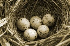 Olympic eggs - closeup of bird's-nest royalty free stock images