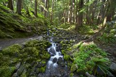 Olympic Forest Royalty Free Stock Photography