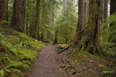 Olympic Forest Path Stock Images