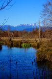 Olympic Mountains Stock Images
