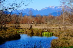 Olympic Mountains Stock Photography