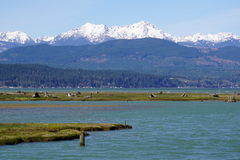 Olympic mountains/Hood canal Royalty Free Stock Photo