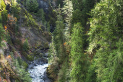 Olympic National Forest. Olympic National Park, in Mason County near the town of Shelton, Washington is the High Steel Bridge.  The view from High Steel bridge Stock Photo