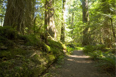 Olympic National Park Royalty Free Stock Image