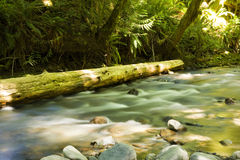 Olympic National Park Royalty Free Stock Photography
