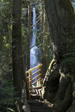 Olympic National Park Marymere Falls. Pacific Northwest Olympic National Park - Historic waterfall on Old growth forest trail near Lake Crescent section of the Stock Photo