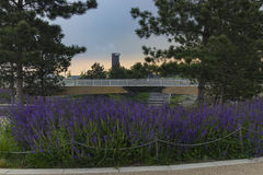 Olympic Park lavender and sunset Stock Photos