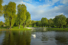 Olympic Park in Munich. MUNICH, GERMANY - MAY 6, 2017 : A view of the trees and lake with a swan in the Olympic Park in Munich, Germany Stock Photos