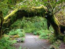 olympic parkregn för skog Royaltyfri Fotografi