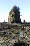 Olympic Peninsula Stock Images