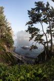 Olympic Peninsula Coast 1 Stock Image