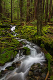 Olympic Peninsula Creek, Washington State. A creek winds it's way through the forest on the Olympic Peninsula in Washington State Stock Image