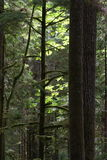 Olympic Peninsula Rain Forest Royalty Free Stock Photos