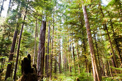 Olympic Peninsula. Trees near Lake Crescent in the Olympic Peninsula, WA state Stock Images