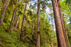 Olympic Peninsula Stock Photos