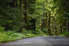 Olympic Rainforest Royalty Free Stock Photography