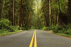 Road with yellow lines through green forest Stock Images