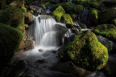 Olympisch Nationaal Park, Washington State stock foto