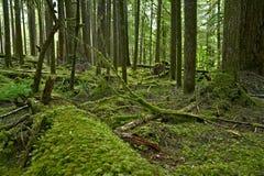 Olympisch Regenwoud stock afbeelding