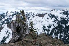 Olympische Berge Stockfotos