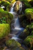 Olympischer Nationalpark, Washington State Stockfotografie