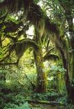 Olympischer Nationalpark, Washington, USA Stockbild