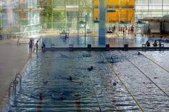Olympischer Swimmingpool Stockbild