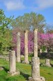 Olympiska kolonner och Cherrytrees Royaltyfria Bilder