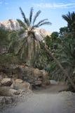Omã: Barranco Imagem de Stock Royalty Free