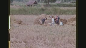 Omłotowa adra na ryżu polu zbiory