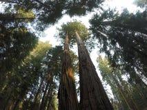Om aard te bewaren Sequoia Nationaal Bos royalty-vrije stock afbeeldingen