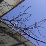 Om du försökte precis blick på den blåa himlen royaltyfri bild