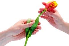 Om een bloem te geven Stock Fotografie