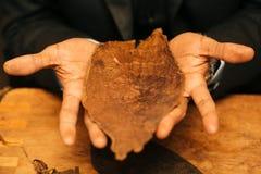 Om een sigaar met zijn handen, bladen te maken voor een sigaar, handwork Royalty-vrije Stock Afbeelding