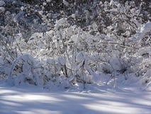 Om för växten snön mot efterkrav, det kan skydda mot förkylning och frost Arkivfoto