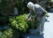 Oma die in de tuin werkt Stock Fotografie