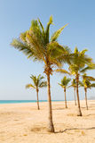 in oman arabic sea palm   the hill near Stock Photos