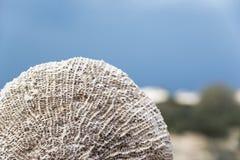 Oman beach sponge Stock Image