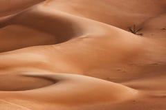 Oman: Leeres Viertel Stockbilder
